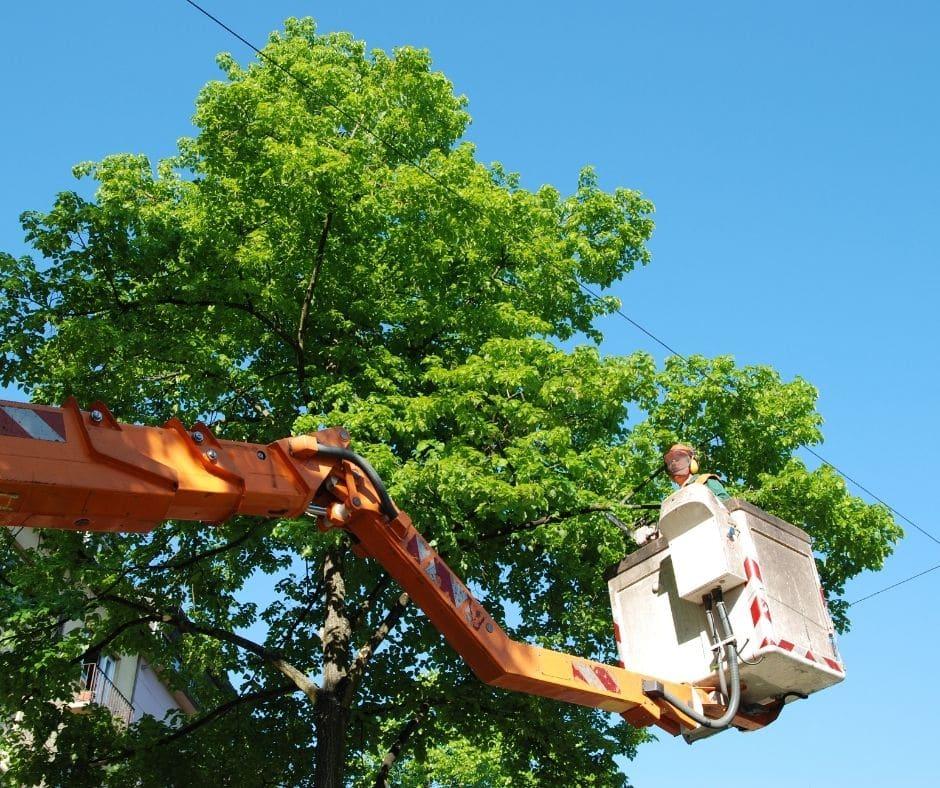 Tree Trimming in Stockbridge, GA
